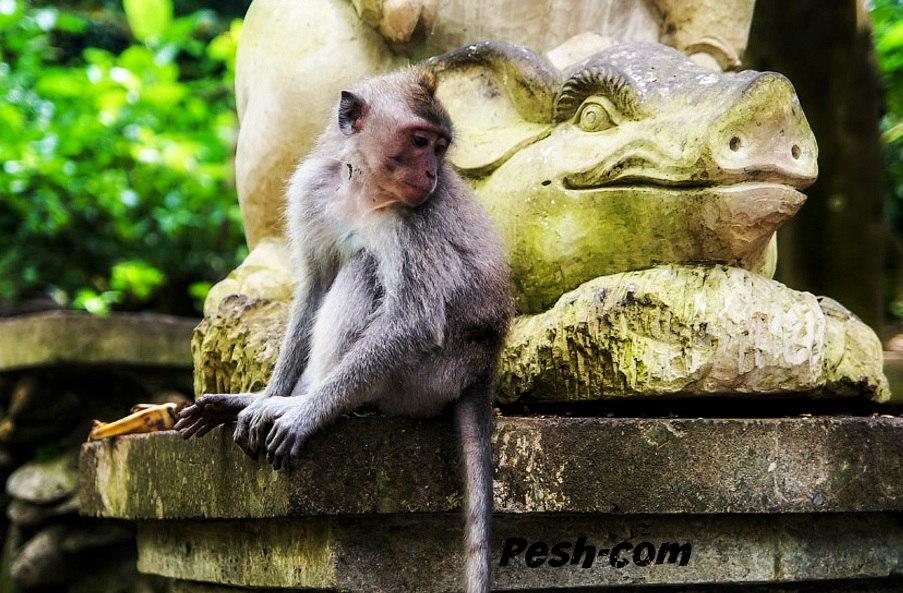 Топ-10 достопримечательностей Бали