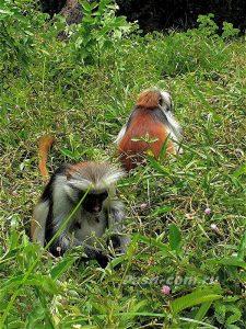 Что посмотреть на Занзибаре
